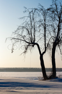 winter landscape with a lone tree near the pond