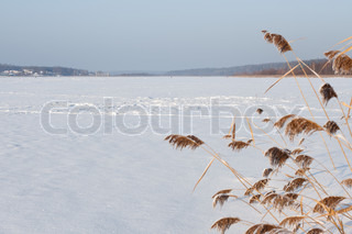 kind of frozen pond with reeds in the foreground