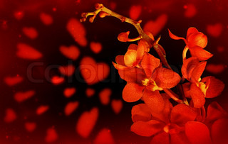 Happy Valentine card, red fresh orchid flower with hearts isolated on black background
