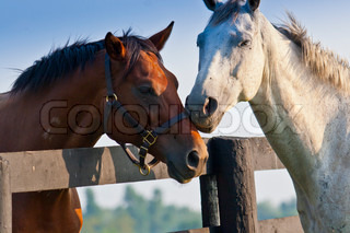 Two loving horses at horse  farm split by fence