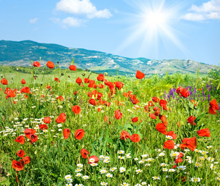 Beautiful summer mountain landscape with red poppy and white camomile flowers and sunshine