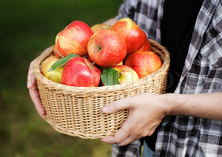 Man holding a basket full of red ripe apples