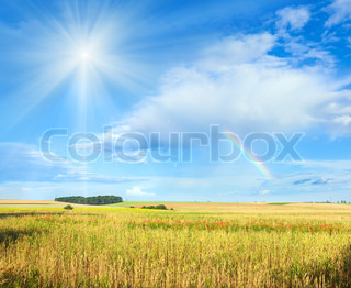 Rainbow and sunshine in blue cloudy sky above summer wheat field