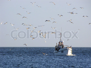 Fishing boat on the sea surrounded by seagulls. Throwing fish overboard.