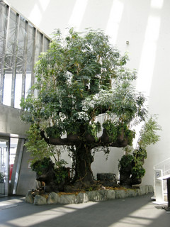 The tree in the house in Japan