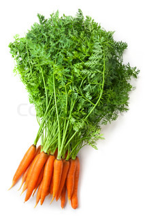 Big bunch of fresh carrots with green tops