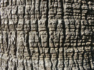 Tree bark texture. abstract background