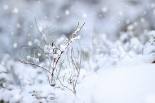 First snow impression, beautiful winter concept snowfall