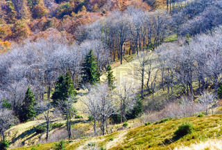 Autumn stark bare trees on forest edge Carpathian mountains, Ukraine