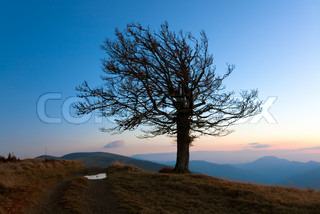 Lonely autumn naked tree on night mountain hill top in last sunset light