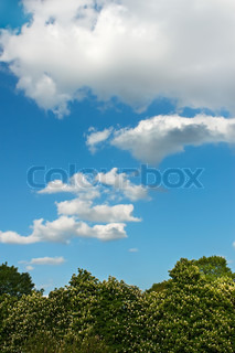 Beautiful cloudy scenery over the flowering chestnut trees