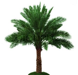Palm tree isoleret på hvid baggrund