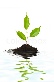An image of a tiny green plant and water