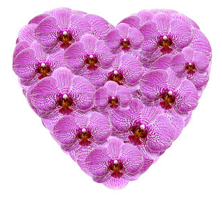 Heart shape made from pink orchid flowers isolated on white background
