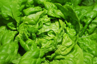 Image of 'cabbage, texture, food'