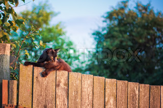 Cat is walking on a fence Neighbors? cat is staring at photographer