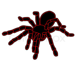 Tattoo of black widow isolated on white background
