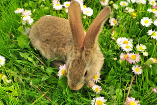 Cute Rabbit in the Garden in Summer