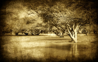 Grunge style picture of old forest with river flood, sepia toned