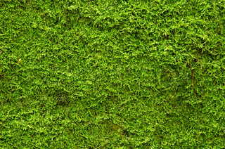 A background of green moss