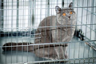 A frightened cat with orange eyes staring out from a cage