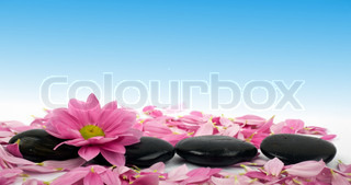 An image of row of stones with flower in water
