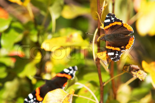 An image of a butterflies siting on autumn leaves