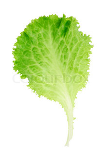 Leaf of lettuce isolated on white background
