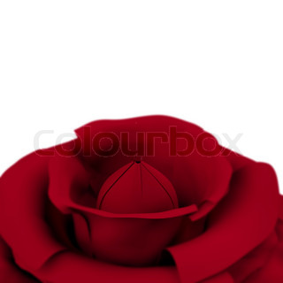 Rose With White Copyspace Background Showing Love Valentines And Romance