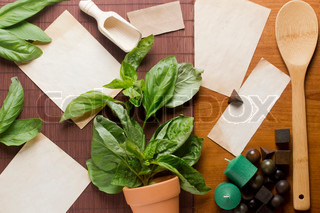 Directly above photograph of basil leaves, papers, and decorative objects for herbal medicine or culinary topics Add your text to the papers