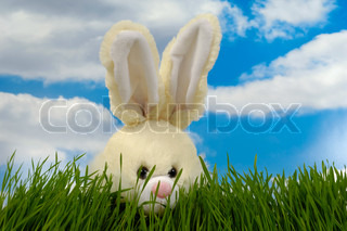 Easter bunny is hiding in the green grass In the background you can see a blue and cloudy sky