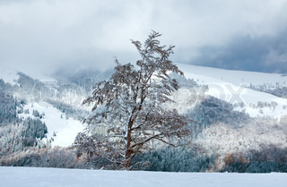 First winter snow on big beech tree in mountains and last autumn foliage on far mountainside