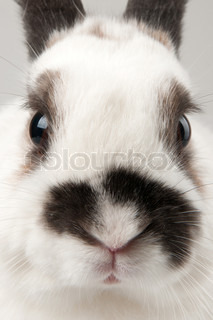 white rabbit with blask spots