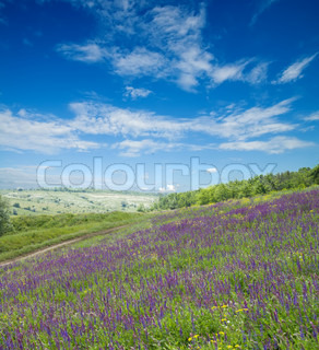 green meadow with flowers and blue sky