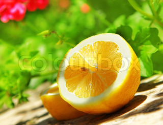 Fresh juicy slice of lemon fruit, garden's harvest season