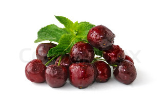 A handful of fresh cherries in water droplets on a white background