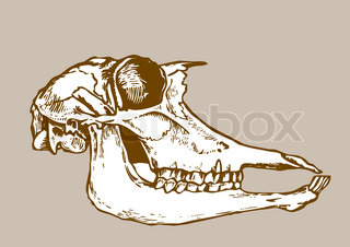 skull silhouette on brown background
