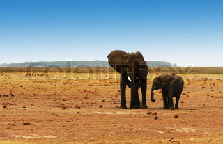 African safari, wild elephants family and landscape of Amboseli National Park, Kenya