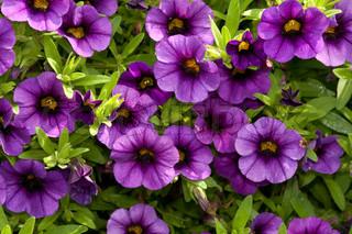 Billede af 'smuk, planteverden, sæson'
