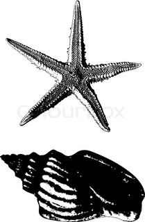 Shell and starfish drawn in view of the old prints on a white background