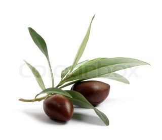 Frisk oliventræ gren med oliven