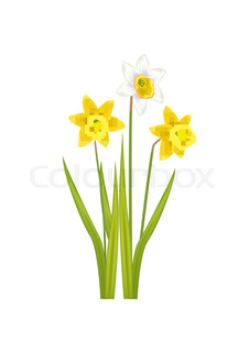 Seamless pattern with daffodil narcissus stock vector colourbox daffodil narcissus bulbous eurasian plant flowers mightylinksfo