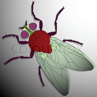 fly cartoon, abstract vector art illustration image contains transparency