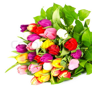 bouquet of fresh assorted tulip flowers on white background