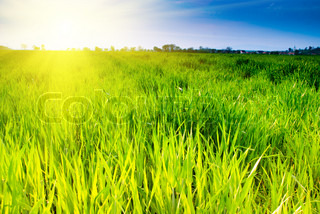 Green grass and sunshine on sky