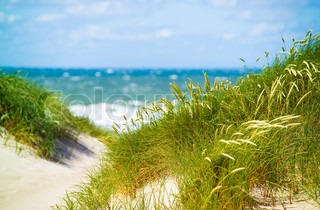 sand dunes by danish beach