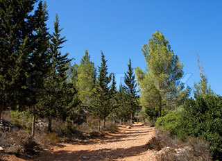 Empty hiking trail in the pinetree and cypress woods