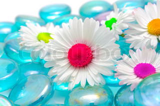 Beautiful Chamomiles with Colorful Middles on Blue Glass Stones