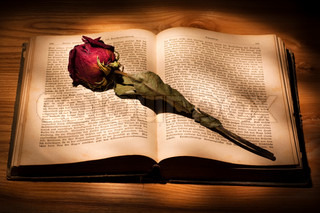 Dried Rose on an Old Book