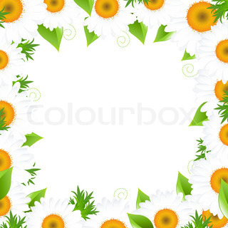 Camomile Border, Isolated On White Background, Vector Illustration